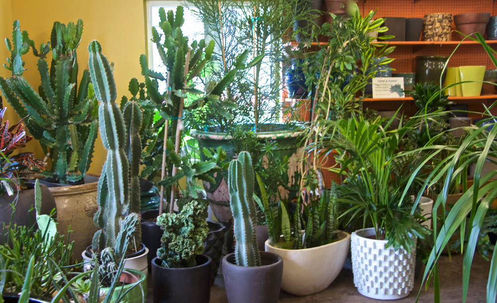 Exotic Indoor Plants