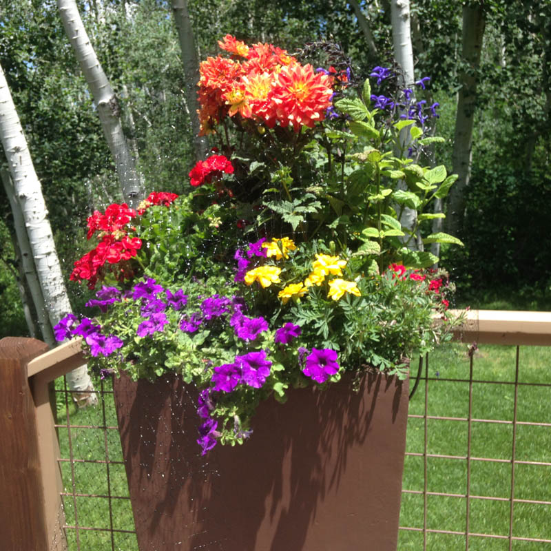 Custom Arrangements Designed by Mountain Greenery in Basalt, CO