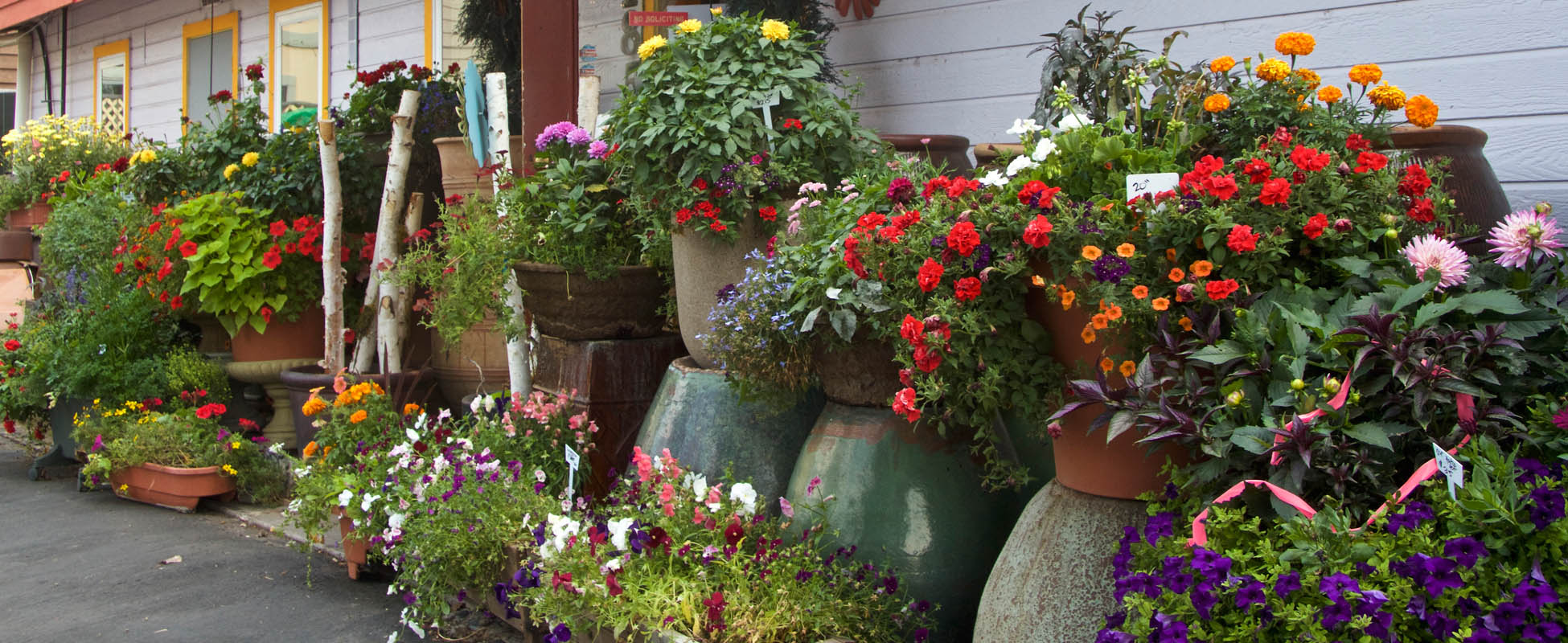 Custom Flower Baskets and Containers near Aspen, CO