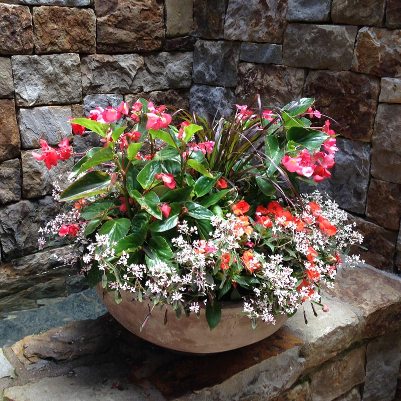 Custom Container Gardens designed by Mountain Greenery in Basalt, CO
