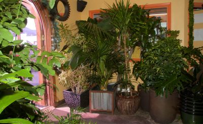 Selection of indoor exotic plants at Mountain Greenery