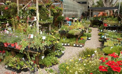 Selection of Outdoor Plants at Mountain Greenery